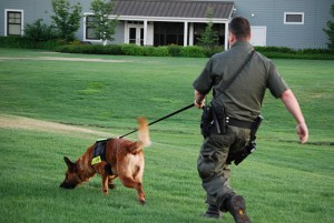 belgian-malinois-training