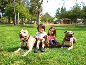 Pitbull-Training-1