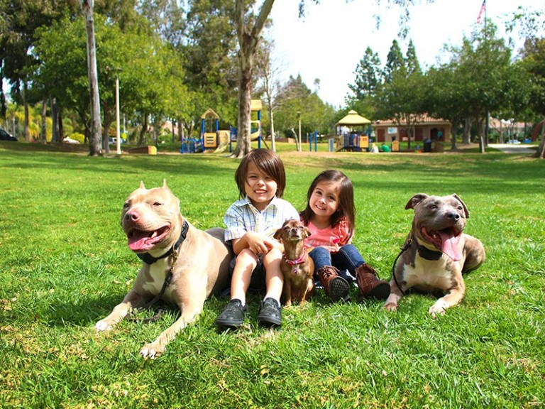 In home dog training dog boarding los angeles orange for Dog kennels los angeles