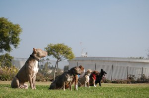dog training5